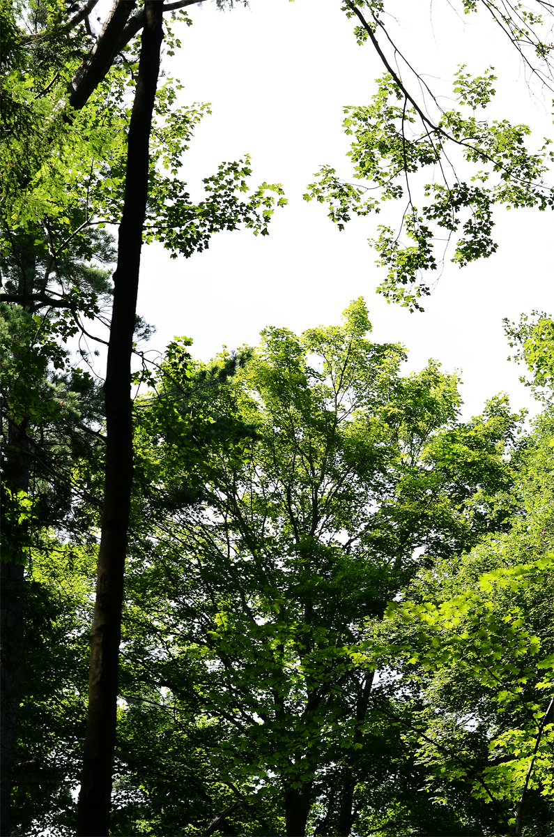pleasanttrees