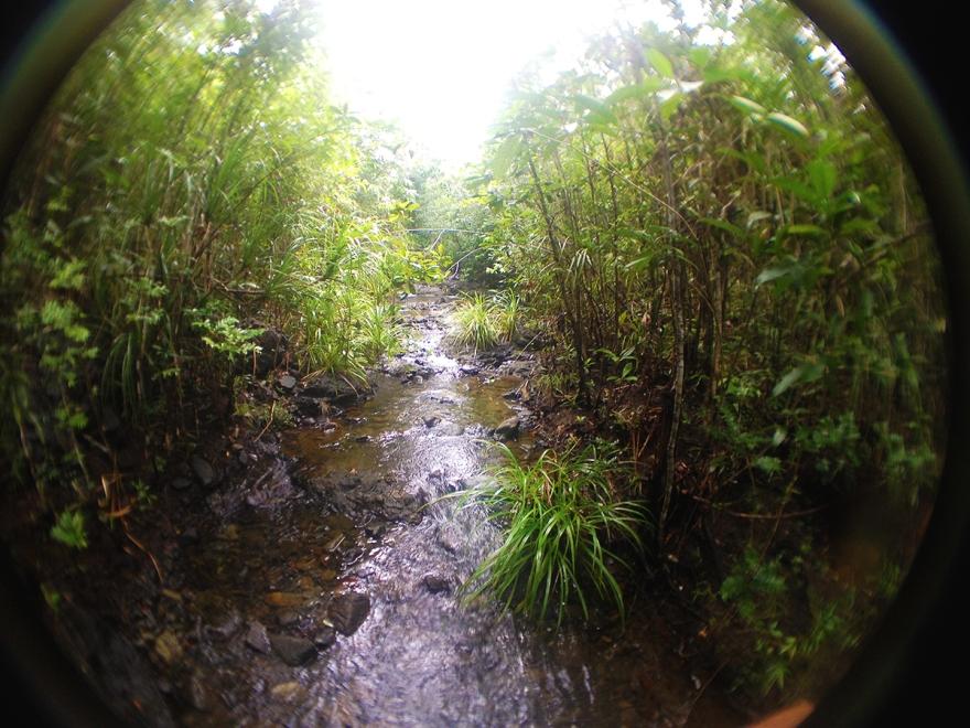 junglefloors