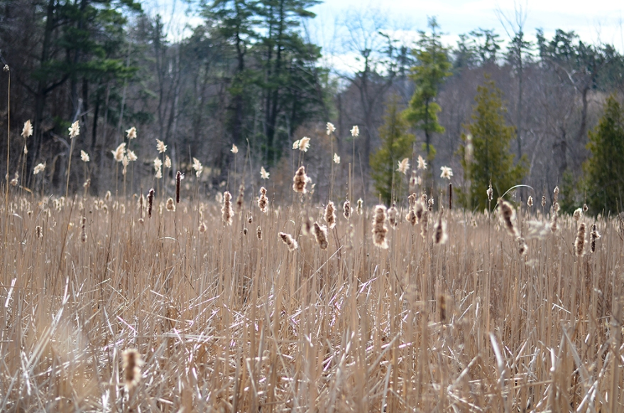 meadows2SM