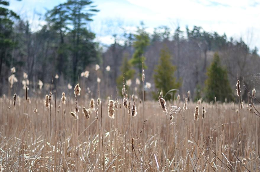 meadowsSM